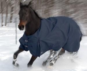 pferde-winterdecke